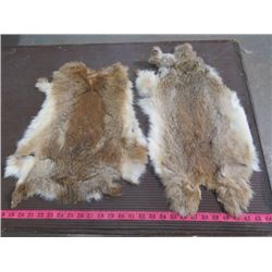 "2 BROWN RABBIT PELTS (17"" X 15""---21"" X 11"")"