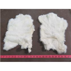 "2 WHITE RABBIT PELTS (16"" X 11"" ---15"" X 10.5"")"