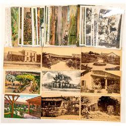 San Diego/Ramona, CA Postcards  #102372
