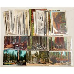 Sequoia/Kings Canyon Parks Postcards  #103243