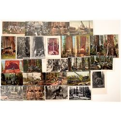 Post Cards / Logging, Loading & Lumber jacks / 26 Items.  #109710