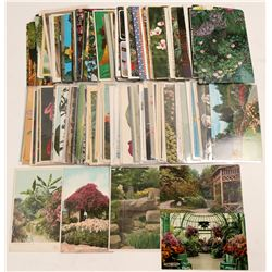 Postcards with Flowers Collection  #105229