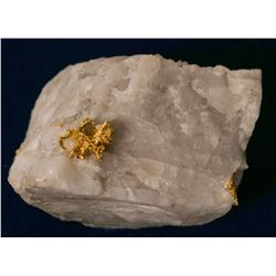 Eagle's Nest Gold Specimen on Quartz  #109078