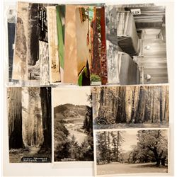 Redwood Highway Postcards  #103196