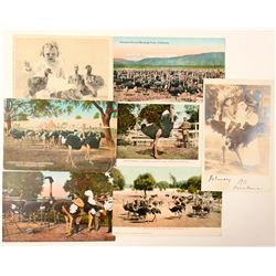 South Pasadena, CA Ostrich Farm Postcards  #102350