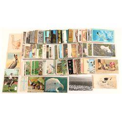 Bird Postcard Collection  #102658