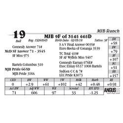 Lot  19 - MJB 9F of 3545 665D