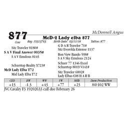 Lot  877 - McD-2 Lady elba 877