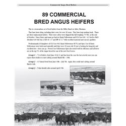 Lot  9002 - Group 3 - 5 Bred Heifers