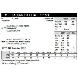 LAUBACH PLEDGE 9101