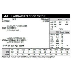 LAUBACH PLEDGE 9052