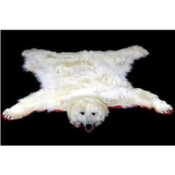 Excellent Polar Bear Taxidermy Rug Mount