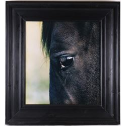 Modern Art Horse Eye Reflection Photograph