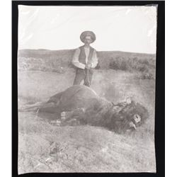 Late 1800's Trophy Buffalo Hunt Photo By Huffman