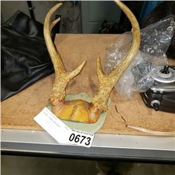 PRONG HORN ANTLERS