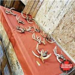 Grouping Antler Sheds (17 LBS)