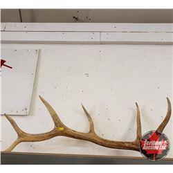 Elk Antler Shed