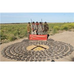 4 DAY DOVE HUNT FOR 4 HUNTERS IN ARGENTINA