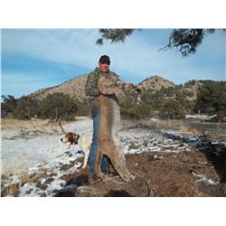NEW MEXICO MOUNTAIN LION HUNT FOR ONE HUNTER
