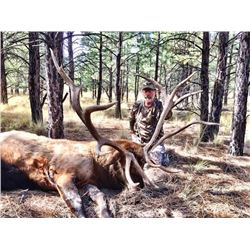 SIX DAY BOW OR FIVE DAY MUZZLELOADER/RIFLE HUNT FOR TROPHY ELK IN NEW MEXICO