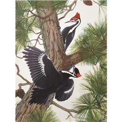 1950 Menaboni Print, Pilated Woodpecker
