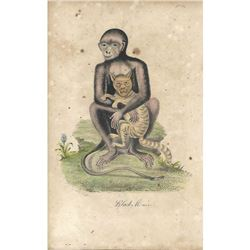18thc Hand-colored George Edwards Engraving, Black Monkey No. 9