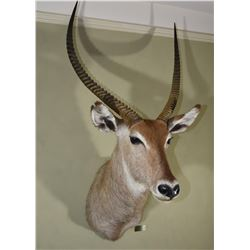 Waterbuck (Central African Empire)