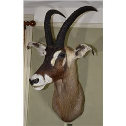 Roan Antelope (Central African Empire)