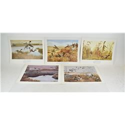 Prints and Wildlife Photography