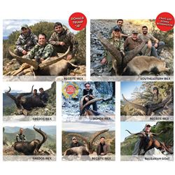International Wild Hunting Spain 3 Day Hunt for Iberian Mouflon for One Hunter