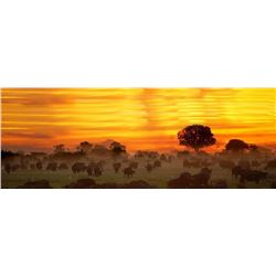 Limpopo Hunting Safaris 5 Day/5 Night Plains Game Safari for 2 or 4