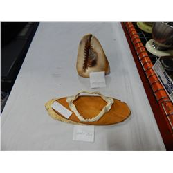LARGE SHELL AND AKULA JAW MONTED