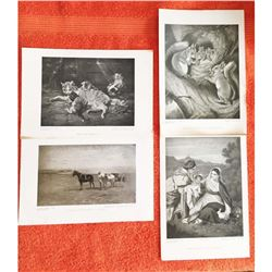 Vintage Grouping of c1920's Half-tone Prints, Animals