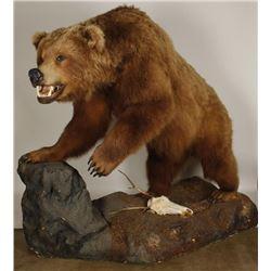 Large Full Mounted Kodiak Bear