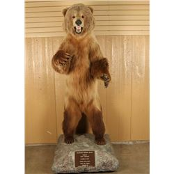Full Mounted Alaskan Brown Bear