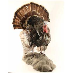 Full Mounted Turkey