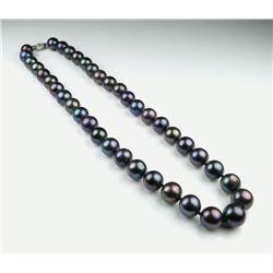 Elegant Strand of Black Pearls
