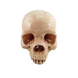 Django Calvin (Leonardo DiCaprio) Skull Movie Props
