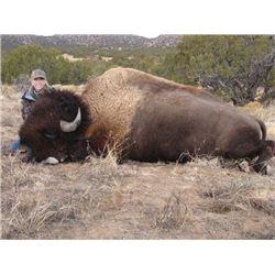 La Mont's Wild West Buffalo & SHOULDER MOUNT!!!