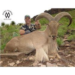 Double Diamond West Texas Free Range Aoudad Hunt