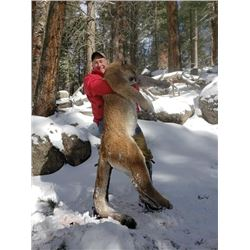 No Limit Outfitters Mountain Lion with full mount Taxidermy and in home mounting
