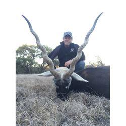 Darter Sky Ranch Texas Blackbuck Hunt with Shoulder Mount
