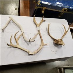 SET OF ANTLERS AND 2 OTHER ANTLERS