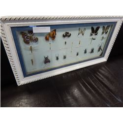 SHADOW BOX OF BEETLES AND BUTTERFLYS