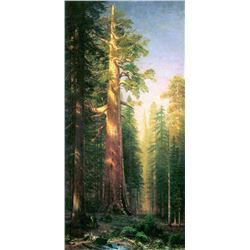 The Big Trees, Mariposa Gove, California by Albert Bierstadt