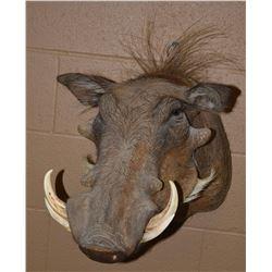 African Warthog Mount