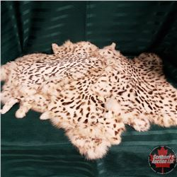 Exotic Spotted Rabbit Skin Pelts (8)