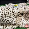 Image 1 : Exotic Spotted Rabbit Skin Pelts (10)