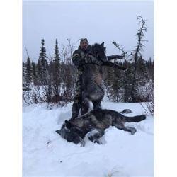 7 Day Wolf Hunt - 2 Person - Alberta