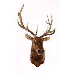 Rocky Mountain Elk Mount